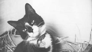 Sam, a macska három hadihajó elsüllyesztését is túlélte