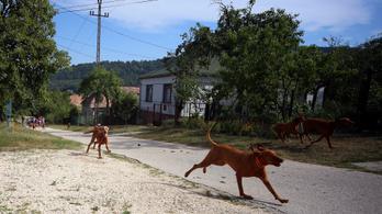 Belső iránytűvel navigálnak a kutyák