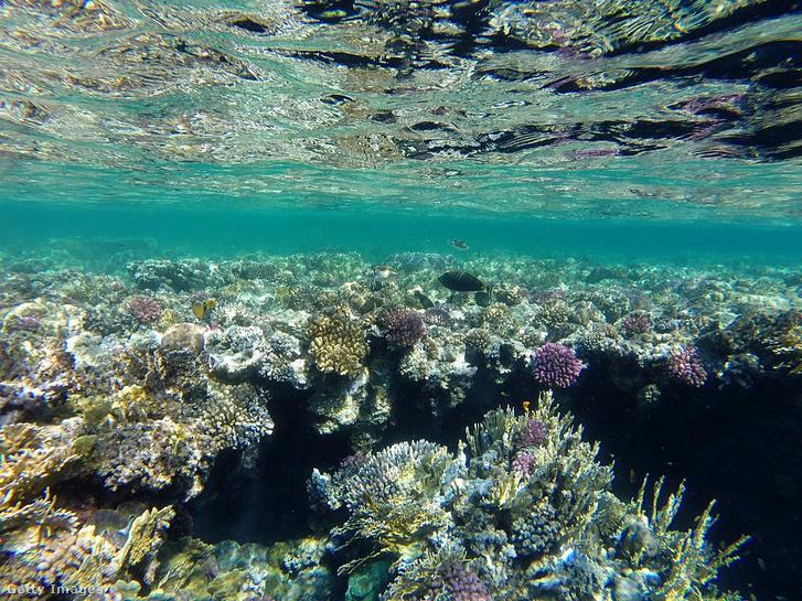Vörös-tengeri korallzátony