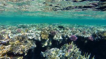 A vörös-tengeri koralloknak meg se kottyan a melegedés