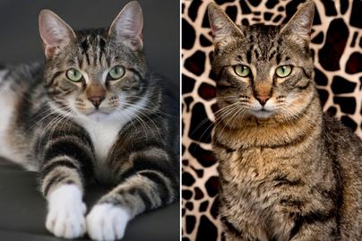 macskafajtak