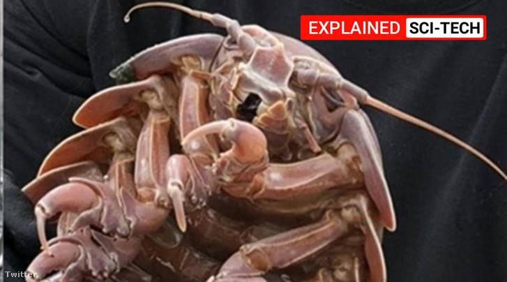 rakasa-cockroach-main