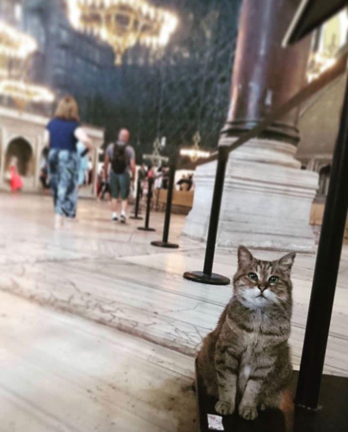 Már 16 éve lakik a Hagia Szophia impozáns épületében a macska. A kép akkor készült, amikor még múzeumként működött.
