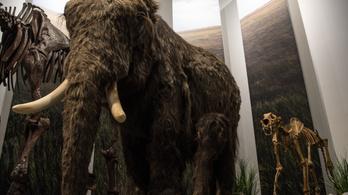 Az ősemlősöknél a hímek voltak a nagyobb csibészek