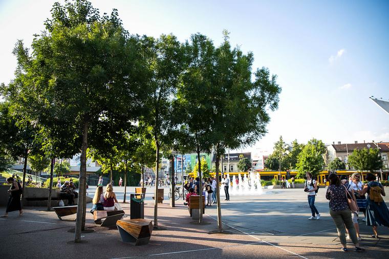 A belvárosi fák sokszor talpalatnyi földterületre vagy hatalmas dézsákba kényszerülnek, a téren alig egy-egy négyzetméter jutott nekik a túléléshez