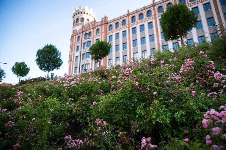 A tér déli oldalában ültetett, rózsaszín rózsabokrok között határozottan tetten érhető az emberi kéz nyoma, ami nélkül ezek a növények nem maradnának életben