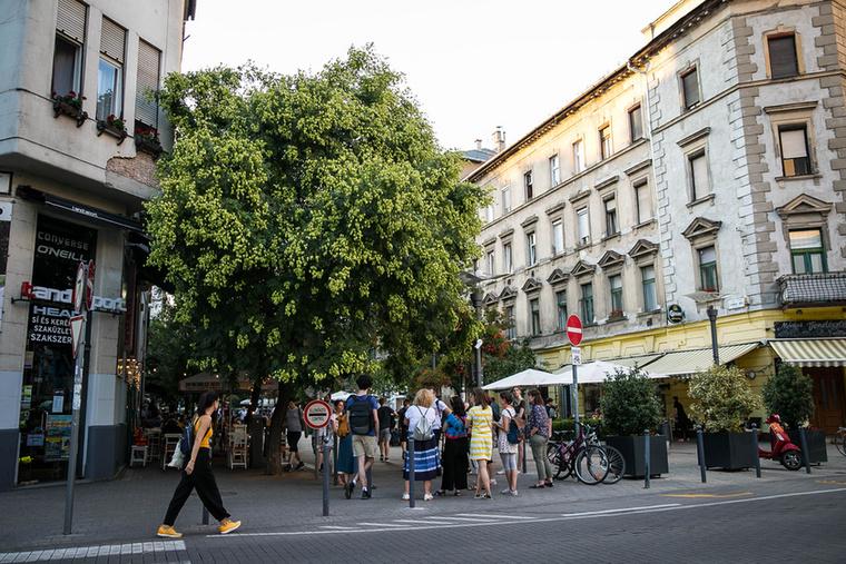 A Lövőház utca éttermeinek teraszai közé kanyarodva az egyik legjellegzetesebb városi növényrendezéssel szembesülünk: a kandelábervirágokkal