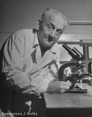 Szent-Györgyi Albert 1946-ban
