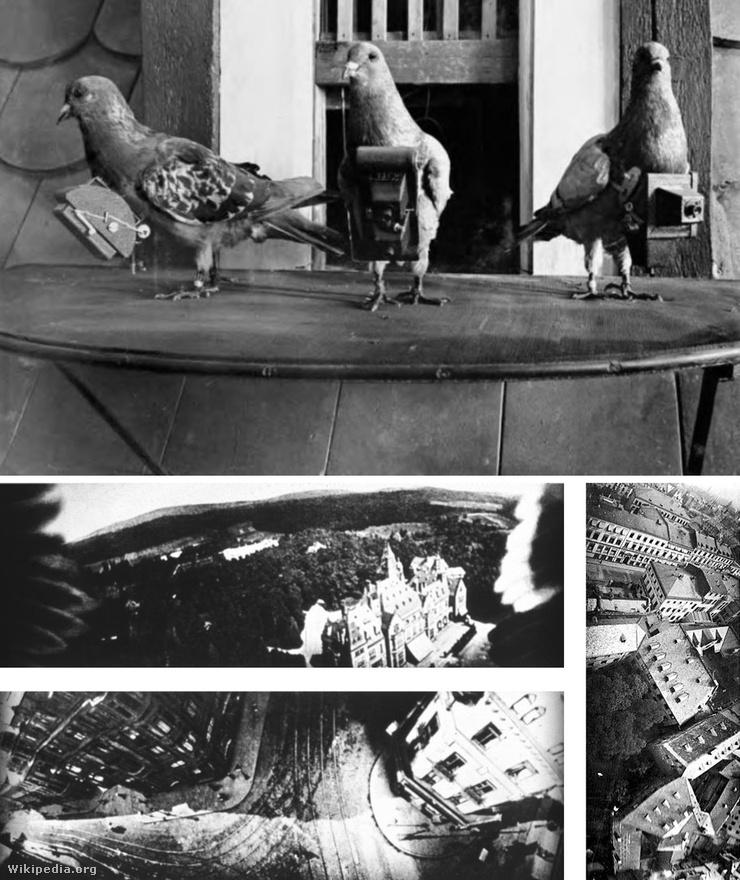 Galambok a hírszerzésben: 1907-ben egy német gyógyszerész ötlete alapján kezdtek először galambokat használni a felderítésben. Julius Neubronner állatokra szerelt könnyű, időzített kamerák felvételeivel kápráztatta el a közönséget a Drezdai Nemzetközi Fotókiállításon, technikájára pedig a hadsereg is felfigyelt. Bár a repülés megjelenésével a fotós galambok háttérbe szorultak, a CIA még az 1930-as években is használta őket titkos felderítő küldetésekre. A felső képen Neubronner galambjai, az alsón a madarakra szerelt kamerák felvételei.