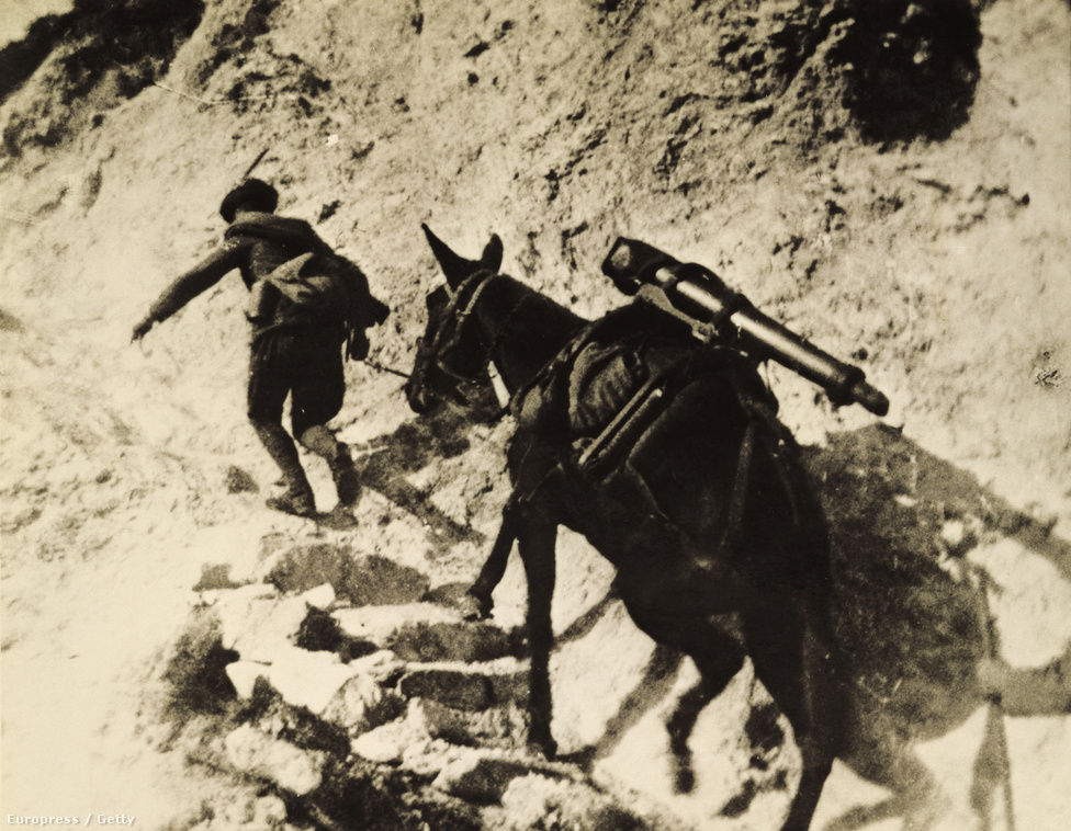 1915, teherhordó szamár az isonzói fronton. Az olasz hadsereg az Alpokon átkelve próbált frontot nyitni az Osztrák-Magyar Monarchia ellen, de nem számoltak a mostoha terepviszonyokkal, sem a zord, hegyvidéki időjárással. Bár az Isonzó-folyó völgyét elfoglalták, nem sikerült előrenyomulniuk és jelentősebb területeket szerezniük – ez nem a szamarakon múlt, akik nehéz teherrel a hátukon is megbirkóztak a hegyi tereppel.