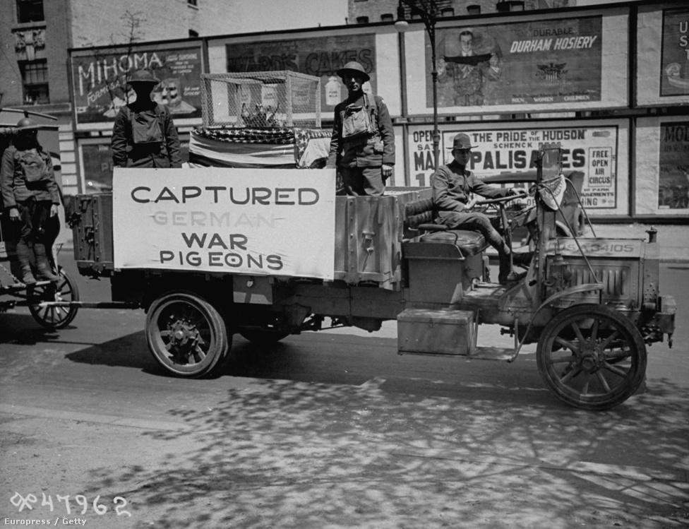 1919, fogságba ejtett német galambok egy amerikai kocsi platóján. Az első világháborúban az angolok, a franciák és a németek is rengeteg galambot használtak, nagyjából százezer teljesített szolgálatot a harcokban.