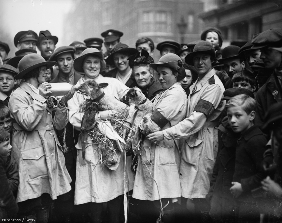 A brit női segéderő (Women's Land Army) tagjai etetik bárányaikat egy londoni felvonuláson. A civil szerveződés az első világháború idején jött létre, hogy a háború idején ne akadjanak meg a mezőgazdasági munkák. 1917-re már hatmillió férfi hiányzott a brit munkaerőpiacról a háború miatt, de a farmerek még így is csak vonakodva alkalmaztak nőket a munkák elvégzésére.