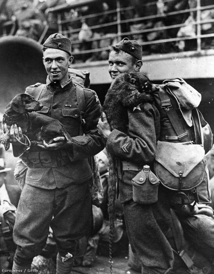 Két amerikai katona indul a harcba, egyikük ölében egy tacskó, a másik vállán kedvenc mosómedvéje pihen. Harci feladatok mellett az állatok jó hatással voltak a csapatok moráljára, sok katona vitte magával házi kedvencét a frontra. A brit- és az amerikai hadsereg alakulatainak mind voltak saját kabalaállataik is.
