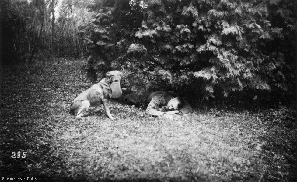 1916, sebesült katonát talált egy bokor alatt a mentőkutya Ausztriában.