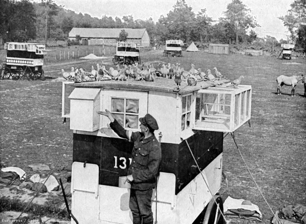 """1916, hírvivő galambok és gondozójuk Franciaországban. Galambokat már a középkor óta használnak üzenetküldésre, az első- és második világháborúban is ez volt a fő feladatuk. A francia hadseregben 600 galamb szolgált az első világháborúban, a leghíresebb francia hírvivő galamb """"Cher Ami""""  a legrangosabb francia katonai érdemrendet, a Croix de Guerre háborús keresztet is kiérdemelte, miután 12 fontos üzenetet kézbesített a verduni csatában. Utolsó útjával kétszáz katona életét mentette meg: egy németek által körbevett alakulat küldte haza a 40 kilométerre lévő támaszpontra, a felmentősereg a galamb által szállított koordináták alapján indított támadást. Cher Ami annak ellenére is teljesítette a feladatát, hogy találatot kapott repülés közben."""
