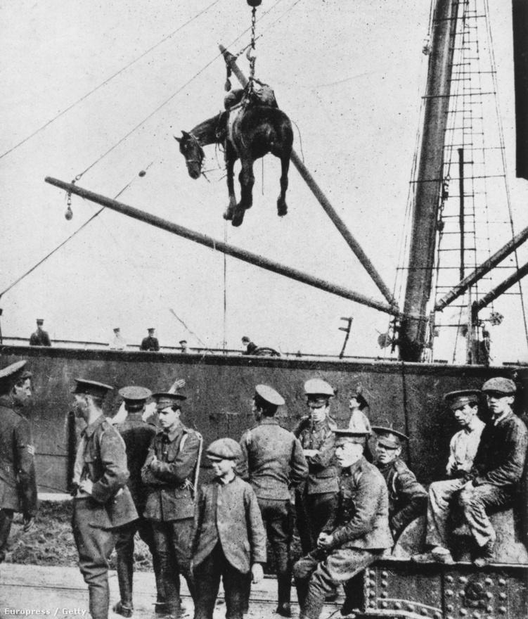 1914, igáslovat emelnek egy brit katonai hadihajóra. Súlycsoportok szerint eltérő feladatokra használták a lovakat a harcokban: a nehézsúlyú (700-900 kg) állatok lassú mozgásuk miatt teherhordásra és szekerek húzására voltak alkalmasak, csatába a könnyű (300-400 kg) lovakból válogatott a lovasság.