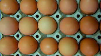 Szalmonellás tojást hív vissza a Lidl