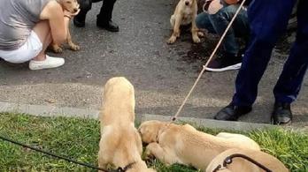 Bekötözött zsákokban vitt kutyakölyköket és egy kecskét egy autós Budapesten