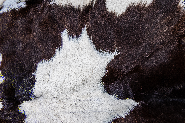 A foltos szőrzet alapján tudod, melyik állathoz tartozik?