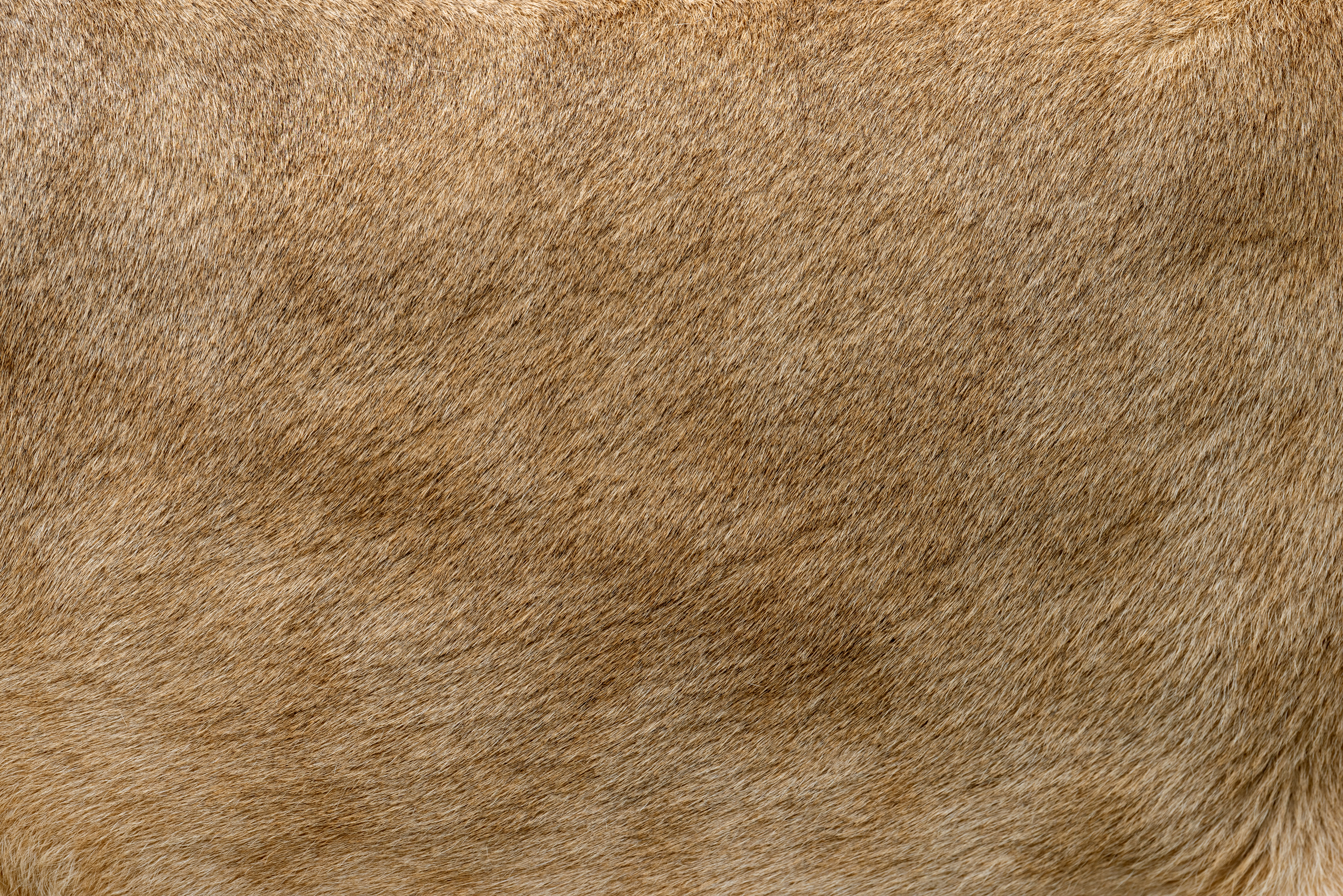 Nem egyszerű, de ennyiből kitalálod, milyen állat lehet a képen?