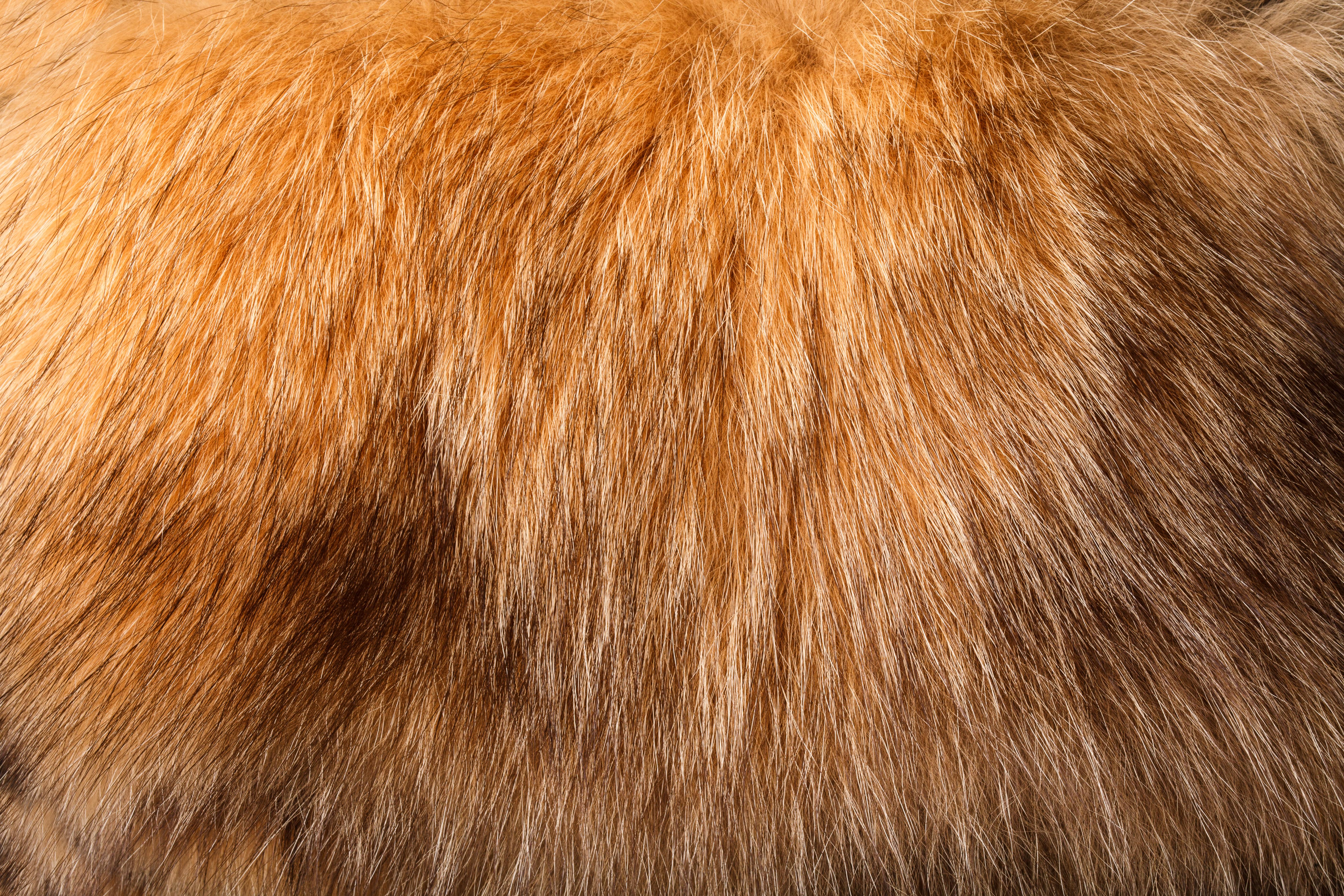 Árulkodó a bunda színe - szerinted milyen állat viseli?