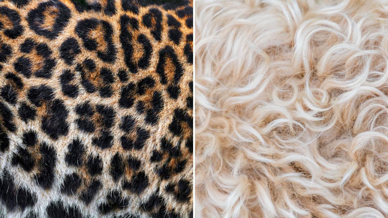 állatok-bunda-borító
