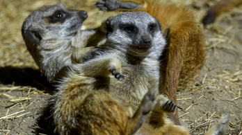 A Pécsi Állatkert 60. szülinapjára készül