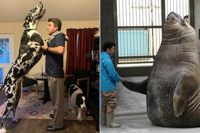 hatalmas-állatok-ajánló