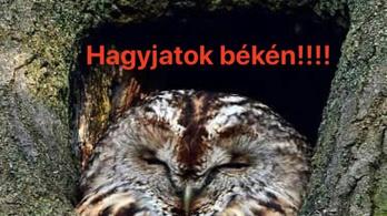 Aggódnak a természetvédelmi szakemberek a Normafára tervezett lombkoronasétány miatt
