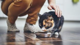 Ezért kéne naponta ötször etetned a macskát