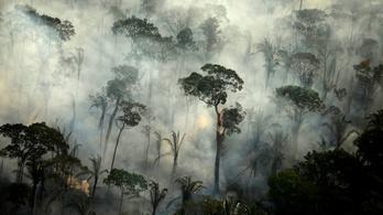 Egy hónap alatt csaknem 7000 erdőtüzet észleltek az Amazonas-medencében