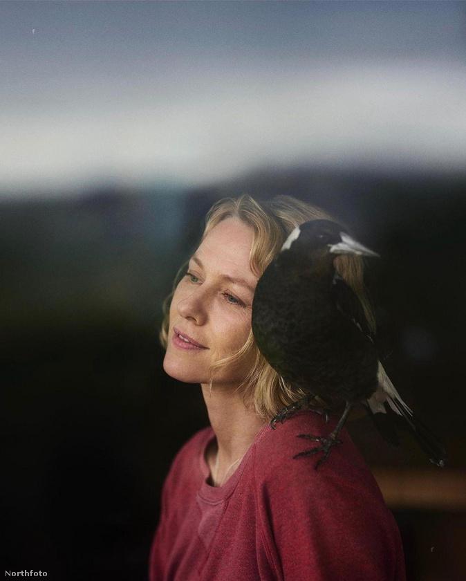 Naomi Wattsnak nem csak úgy véletlenül szállt a vállára egy szarka, hanem ez egy kép bemutatás előtt álló filmjéből, amelynek címe Penguin Bloom.