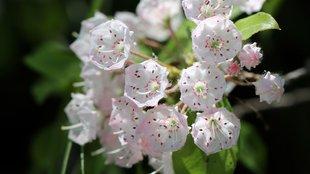 A hét legszebb kerti cserje