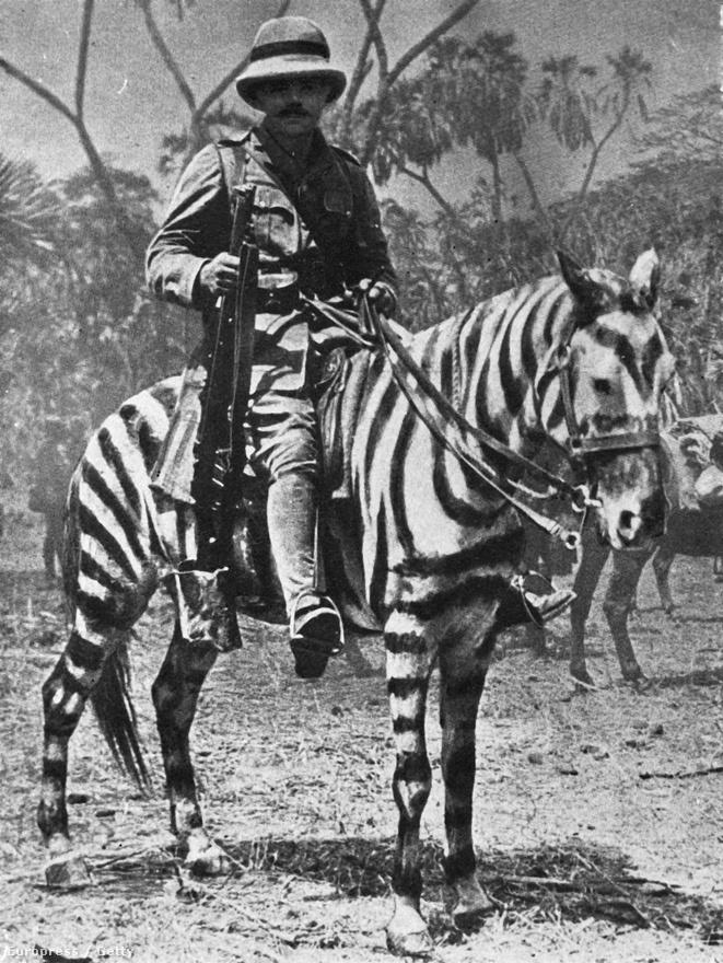 1915, zebramintásra festett póniló a kelet-afrikai fronton. Fontos volt az álcázás, a lovak ugyanis rosszabbul bírták a sivatagi terepet, mint a tevék, a nehezebben mozgó állat pedig könnyebb célpontot jelentett az ellenségnek.