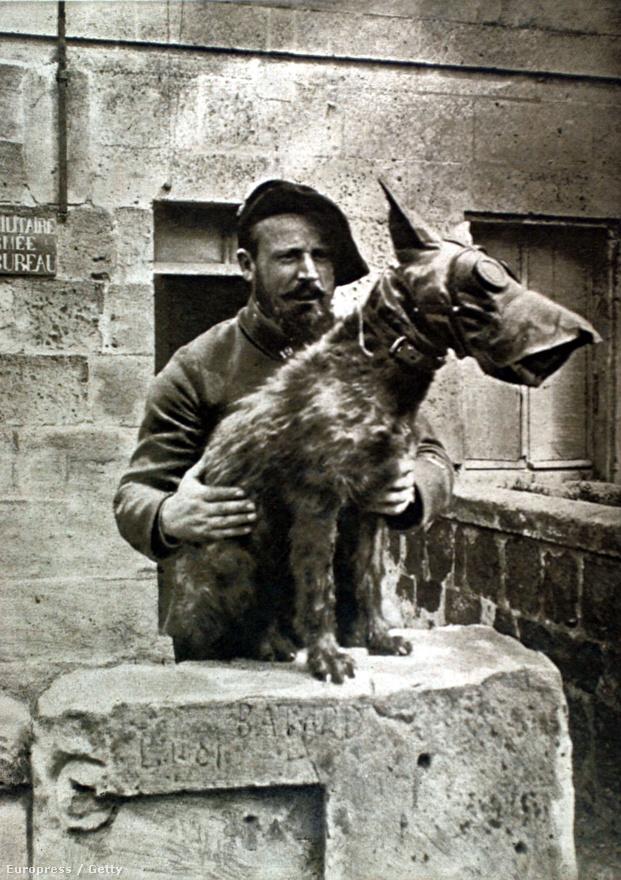 1918, gázmaszkos kutya Franciaországban. Mivel a kutyák bármilyen terepen könnyen boldogultak, messzebbre, kitartóbban és gyorsabban futottak az embernél, nehezebb célpontot jelentettek a mesterlövészeknek. Éppen ezért előszeretettel alkalmazták őket szárazföldi hírvivőként.