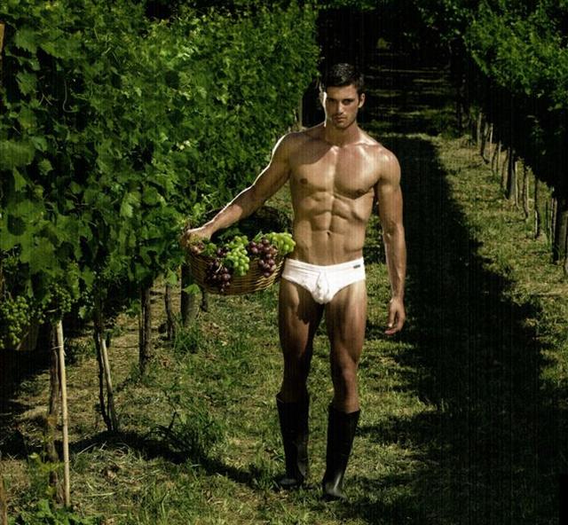 Modus Vivendi - a szőlész