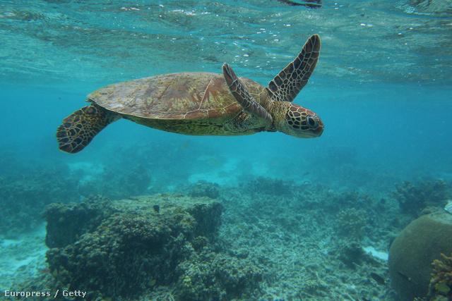 A korallzátonyok a legnagyobb biodiverzitással rendelkező helyek bolygónkon