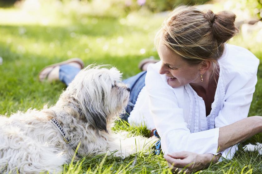 Mi történik a kutya agyában, ha beszélsz hozzá? Meglepő választ adtak a kutatók