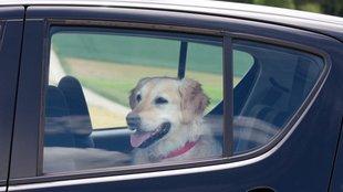 Autóba zárt kutya nagy hőségben: mit tehetsz, ha ilyet látsz?
