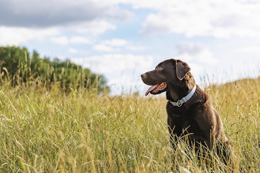 10-ből 7 esetben nem a meleg a hőguta fő oka a kutyáknál - Elkerülhető a baj