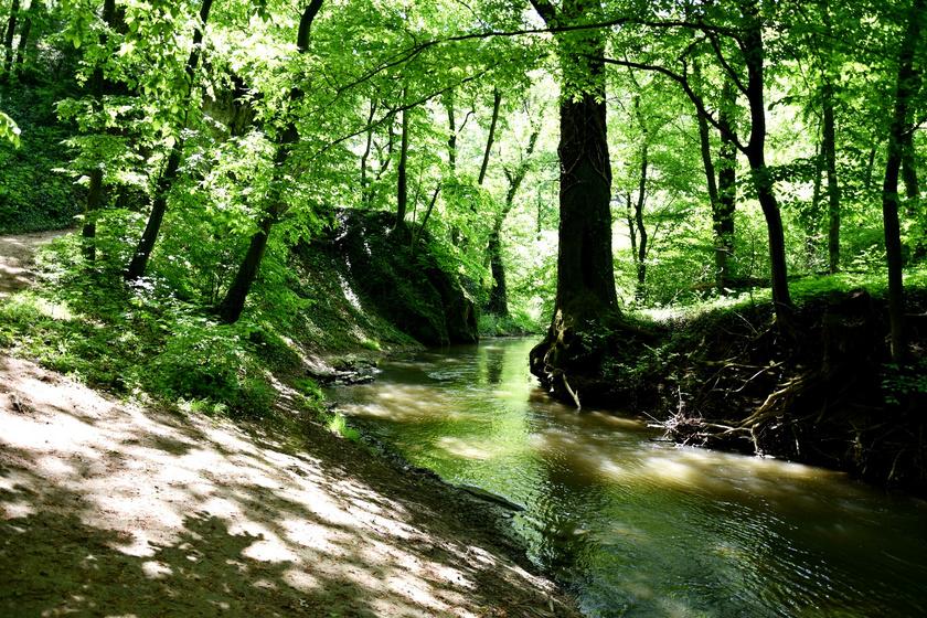 A Bakony vadregényes, festői szépségű patakvölgye: a Gaja-szurdok nyáron mutatja meg legszebb arcát