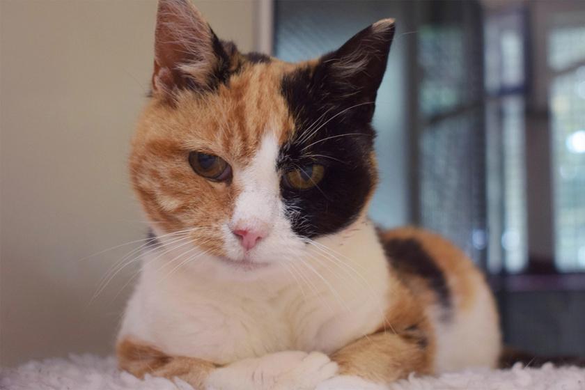 12 év után került elő a macska: egy családi nyaraláson tűnt el