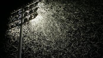 Németországban csökkenthetik a fényszennyezés, hogy óvják a rovarokat