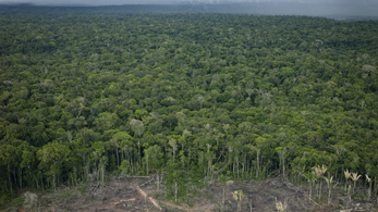 14 éves csúcson az erdőirtások Brazíliában