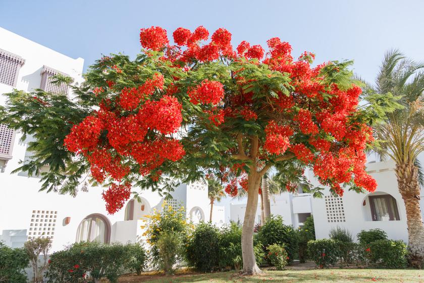 A 8 leggyorsabban növő, álomszép fa a kertbe, ha nem akarsz éveket várni: minden évszakban gyönyörűek