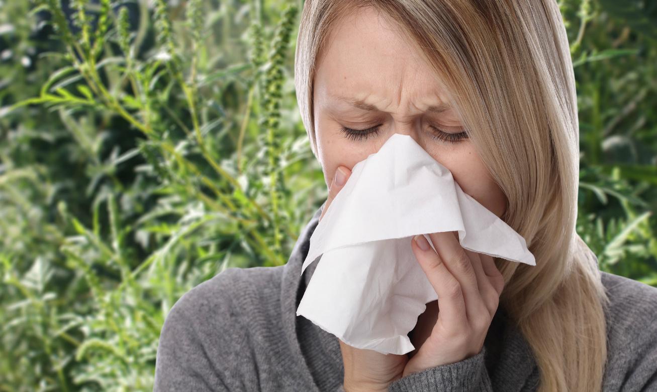 allergia parlagfű