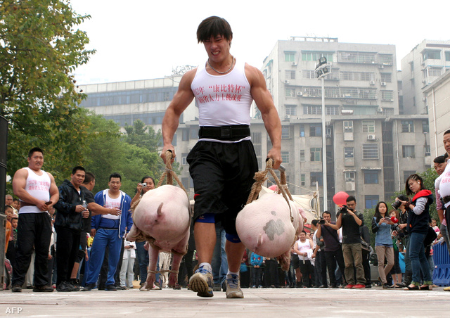 Az egyik versenyző cipeli a disznókat