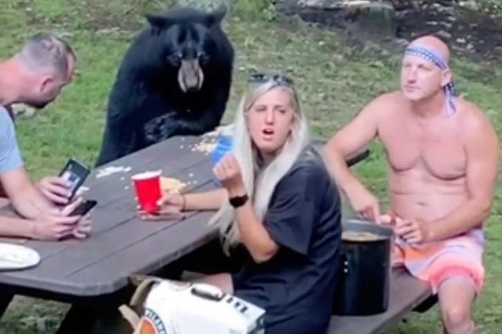 black-bear-01