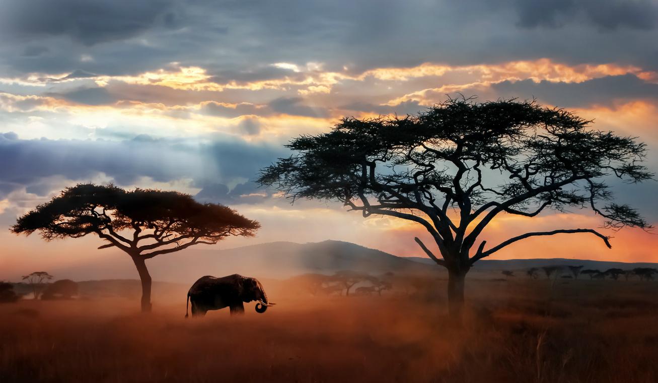 afrika nyitó
