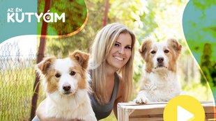 Miért fontos, hogy kutyád parancsra feküdjön? Arany Cynthia válaszol
